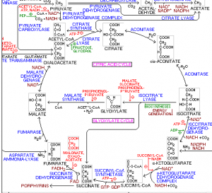 metabo_glucose